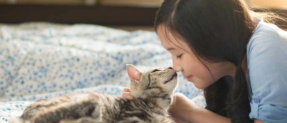 Let's Talk About Respiratory Infections in Cats
